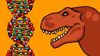 I'll make you a Dino if it helps to teach genetics!